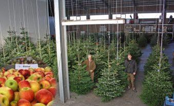 """Jetzt geht es los: """"Hängende Weihnachtsbäume"""" und 2 Kilo Elstar"""