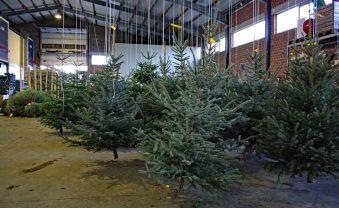 Den Weihnachtsbaum im Trockenen kaufen