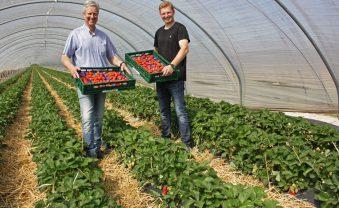 Auf unserem Obsthof hat die Erdbeerernte begonnen.