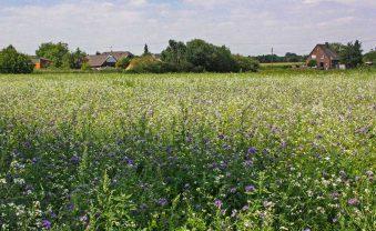 Artenvielfalt erhalten: Blühwiese statt Kürbis-Anbau