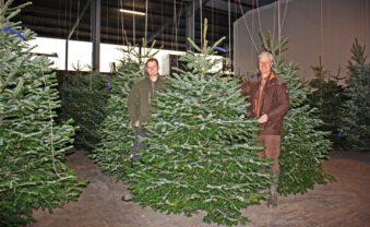 Blaufichten und Nordmanntannen: Die Auswahl an Weihnachtsbäumen ist groß