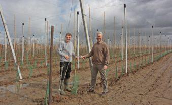 6000 neue Bäume: Apfelplantage in Vorbereitung